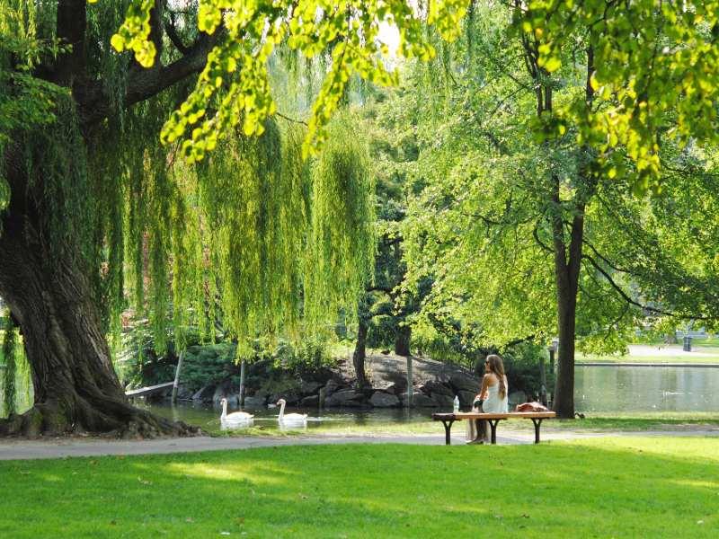 Persona in un parco