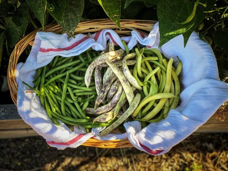 Come Realizzare un Orto biologico per una scelta sostenibile