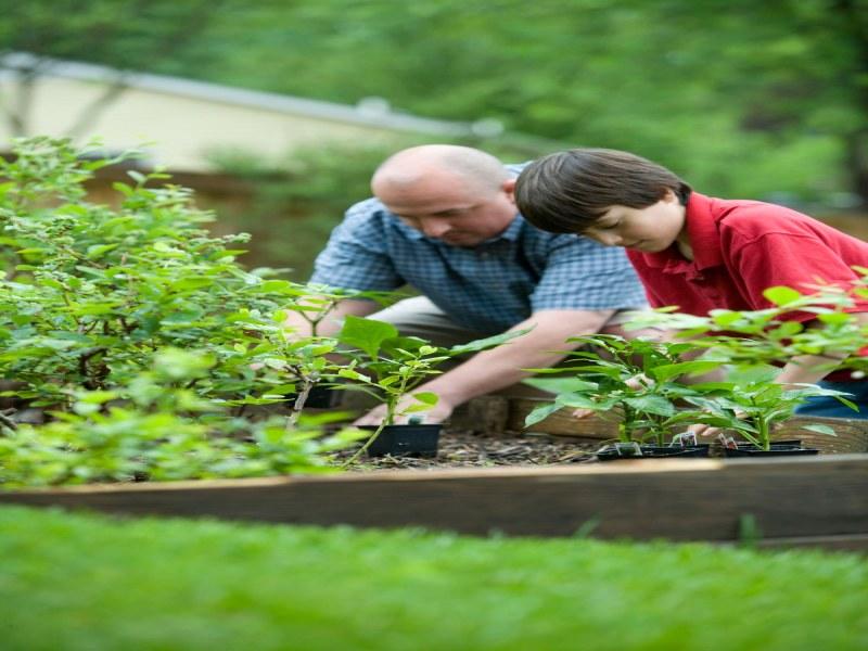 padre e figlio che coltivano insieme il terreno