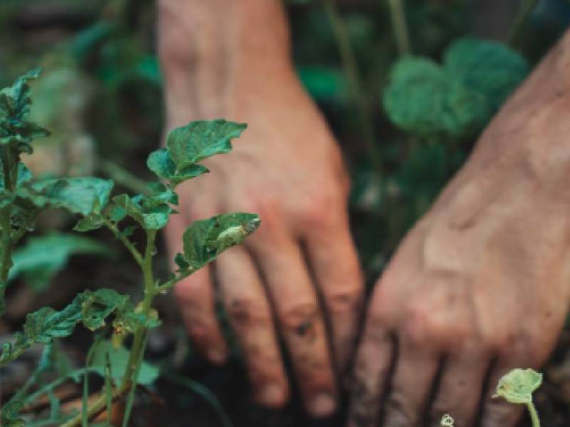 persona che semina nell orto